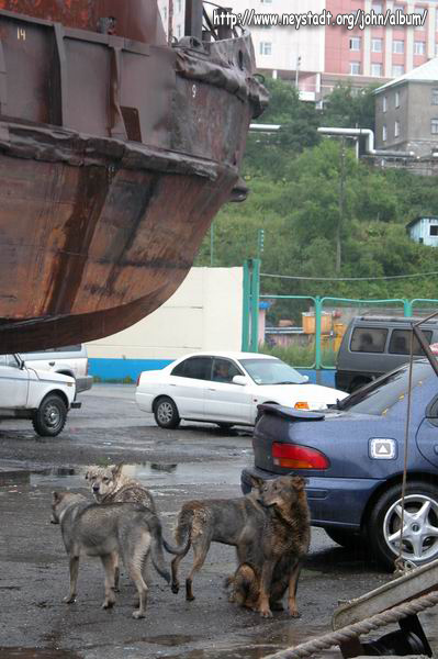 Kamchatka/DSCN5417_Dogs_in_the_Port.JPG